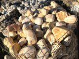akvaryum kayaları dekor kayaları